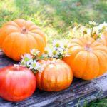 ハロウィンの飾りやグッズは無料ダウンロードして手作りしよう!