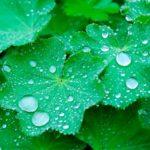 梅雨時期の食中毒の原因と自分でできる予防法は?お弁当も気をつけよう!