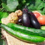 アブラムシを無農薬で駆除する簡単な方法7選!酢やアルミホイルが効く?