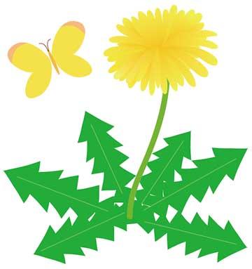 春に咲くタンポポの花